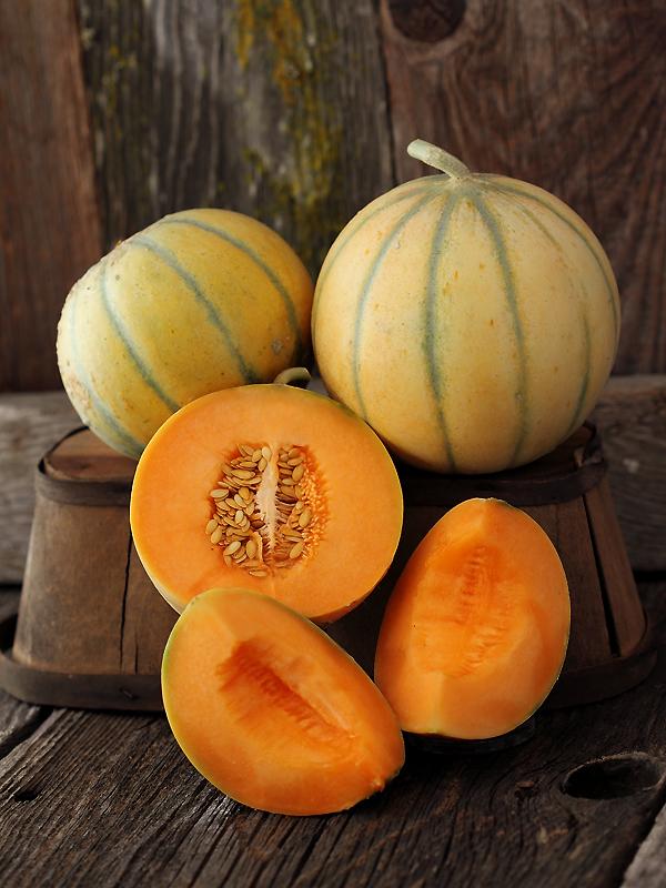 for Melone charentais