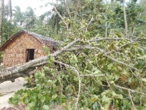 Cyclone Donna Appeal