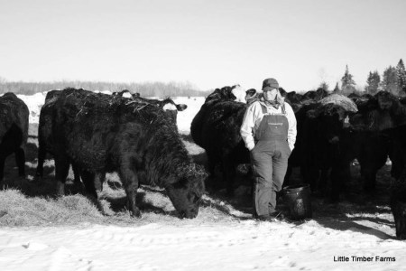 All Things Minnesota Agriculture - Rachel Gray and Cattle