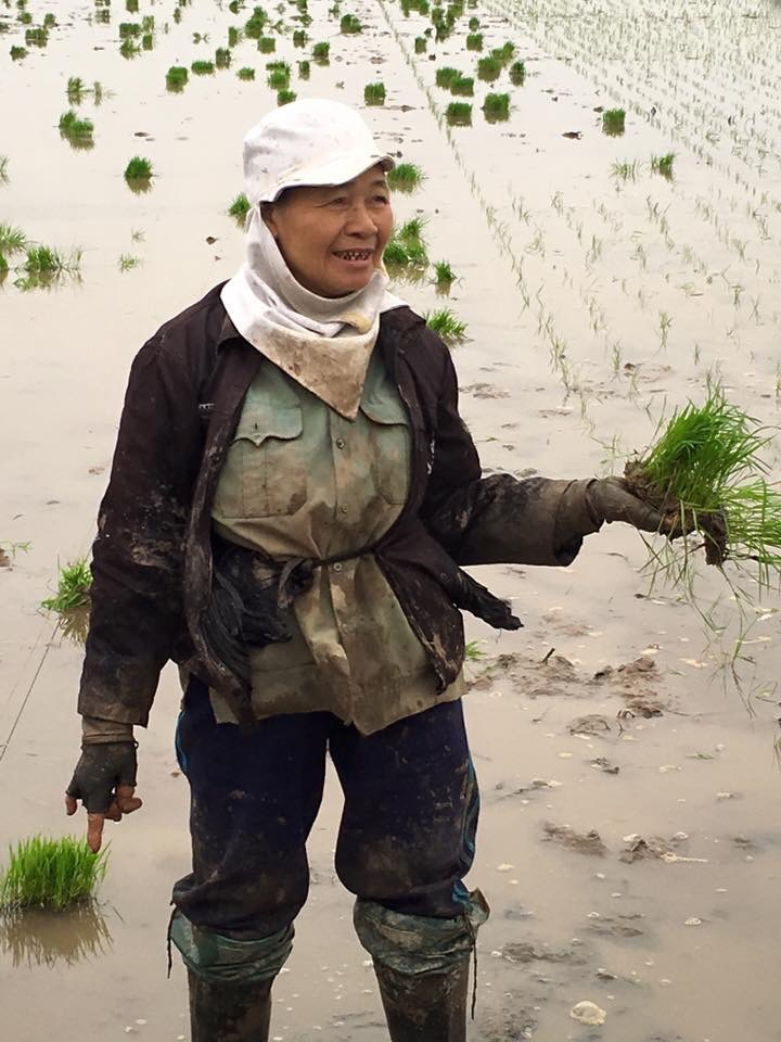 woman in the rice field