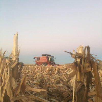 MN Agriculture: M and M Family Farms, Crops and Pigs