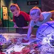 students in aquarium
