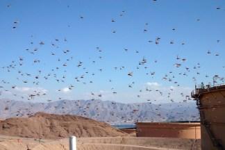 World Mission Sows Gospel Seeds in Ethiopia Despite Locust Plague Devastation