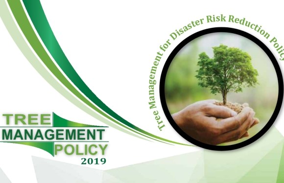 Tree Management for Disaster Risk Reduction Policy