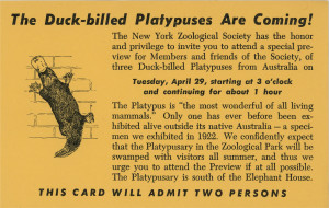 One of the highlights of my scanning - promotional material for a new exhibit at the zoo.
