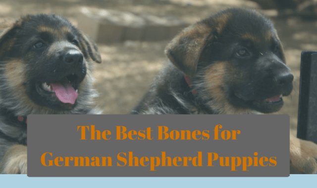 Best Bones for German Shepherd Puppies