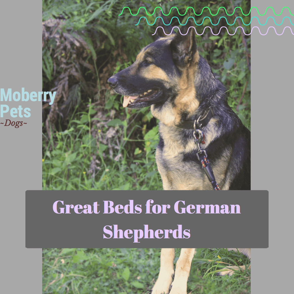 Best Dog Bed For German Shepherds Moberry Pets
