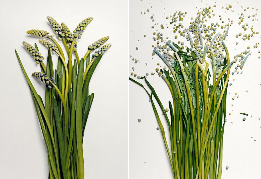 Bunga-bunga Pecah 4