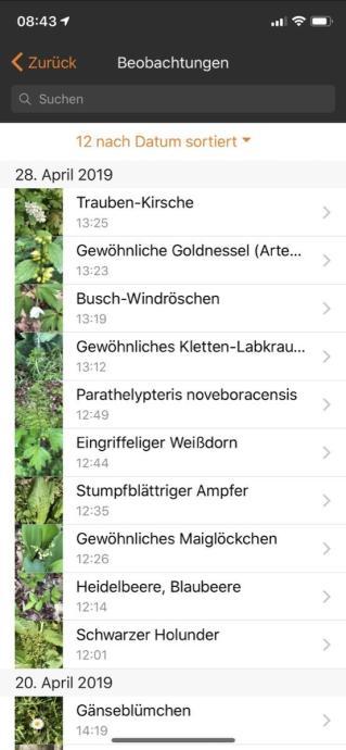 Flora Incognita App 1