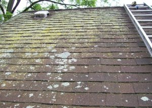 roof mold