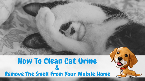 """Featured Image for """"How To Clean Cat Urine & Remove The Smell From Your Mobile Home"""" blog post"""