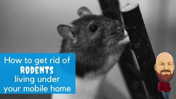 """Featured Image for """"How To Get Rid Of Rodents Living Under Your Mobile Home"""" blog post"""