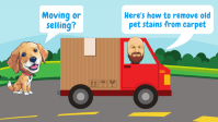 Moving Or Selling? Here's How To Remove Old Pet Stains ...
