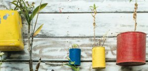 plants growing from recycled tins hanging from a wooden wall