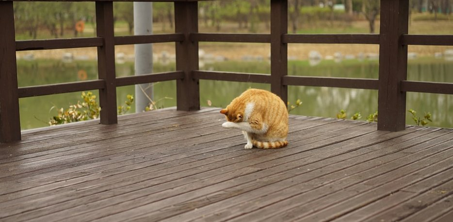 A cat sitting on a wooden deck