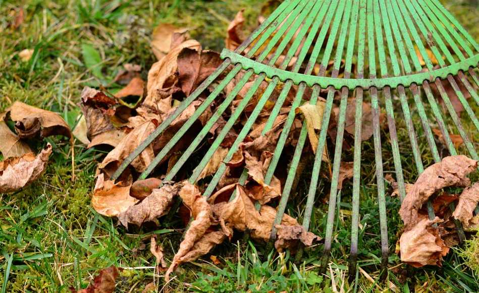 Raking leaves in the fall