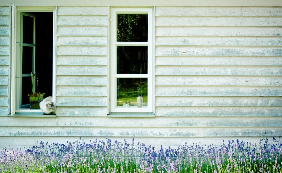 Two windows of a house