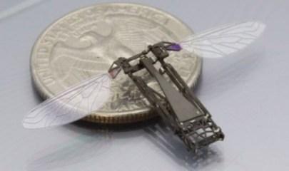 harvard-robobees-2