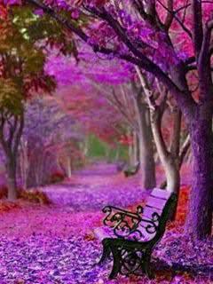 Fall Leaves Hd Wallpapers 1080p Purple Leafs N Trees Wallpaper