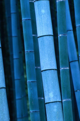 Hd Puzzle Wallpaper Download Blue Bamboo Nature Iphone Wallpaper Mobile
