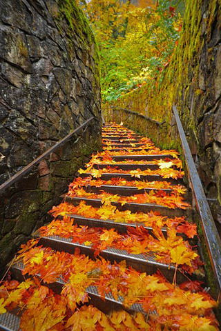 Iphone Wallpaper Fall Leaves Download Autumn Fall In Bridge Iphone Wallpaper Mobile