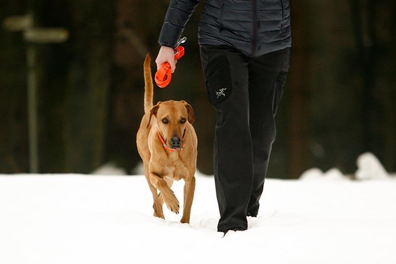 Hund folgt brav ohne Leine
