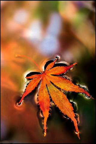 Free Animated Fall Wallpaper Download Leaves In Water Iphone Hd Wallpaper Mobile