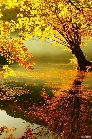 Fall White Pumpkins Wallpaper Download Gorgeous Fresh Autumn Colors Iphone Wallpaper