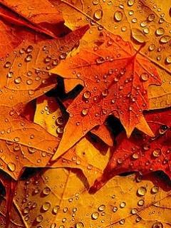 Fall Leaves Falling Wallpaper Download Autumn Dew Mobile Wallpaper Mobile Toones