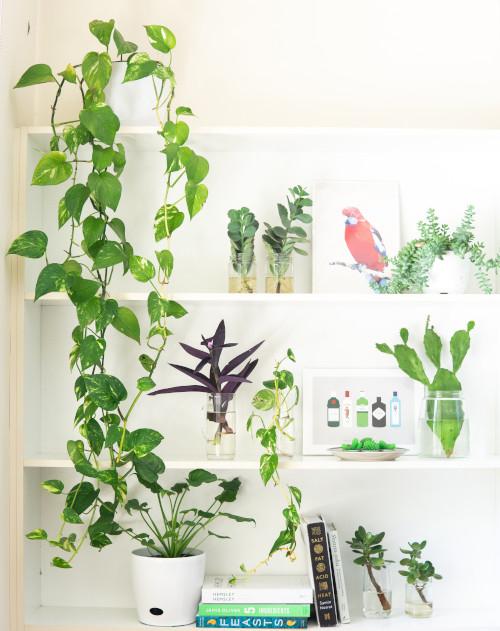 Le piante da appartamento rendono la casa più serena e vivace, aggiungono colore e sono decorative. Arredare Con Le Piante Tutto Quello Che C E Da Sapere Rebecca Mobili