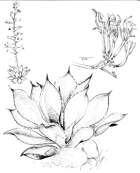 MBG: Research: Manual de Plantas de Costa Rica