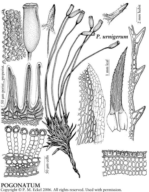 Flora Of North America