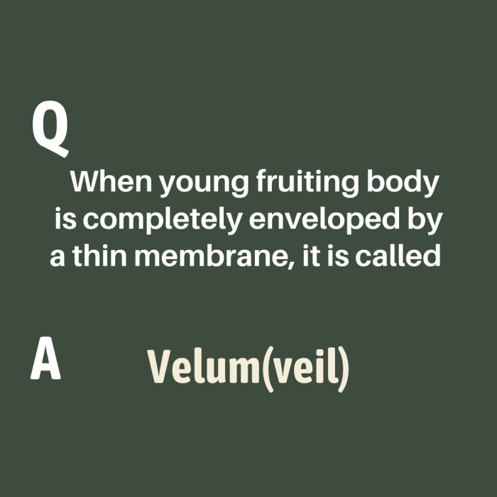 When young fruiting body is completely enveloped by a thin membrane, it is called