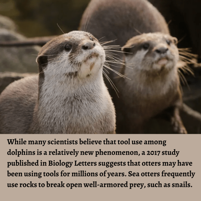 While many scientists believe that tool use among dolphins is a relatively new phenomenon, a 201 ...