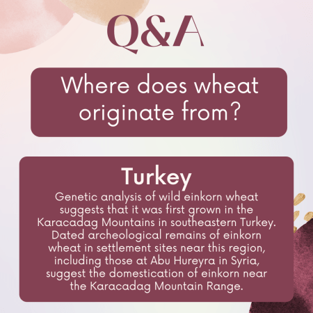 Where does wheat originate from?