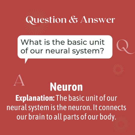 What is the basic unit of our neural system?