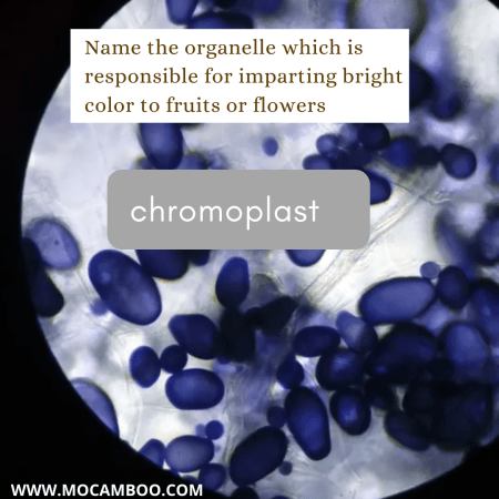 Name the organelle which is responsible for imparting bright color to fruits or flowers