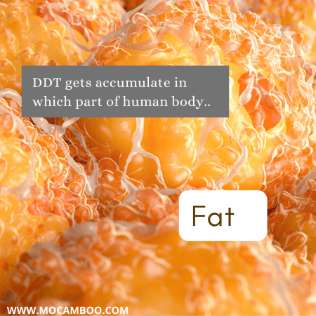 DDT gets accumulate in which part of human body..