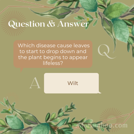 Which disease cause leaves to start to drop down and the plant begins to appear lifeless?