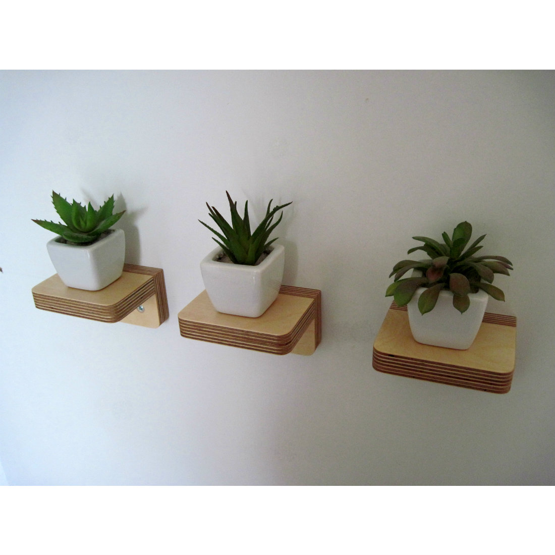 Wall Vases Plants