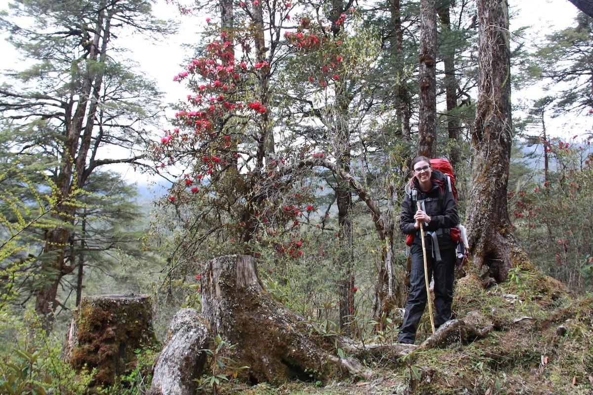 Treks in Bhutan: The OWL Trek-Rhododendron