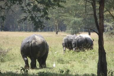 quenia-safari-lake-nakuru-23