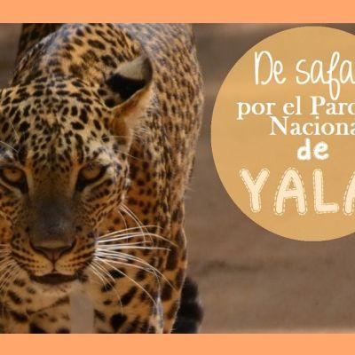 DE SAFARI POR EL PARQUE NACIONAL DE YALA