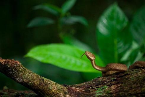 dangerous snake São Paulo, Brazil 2