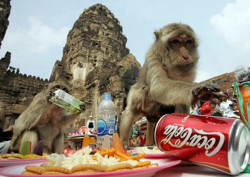 most unusual festivals monkey buffet Thailand