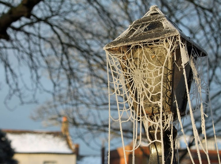 Frozen art by nature, spider net
