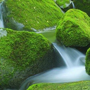 colori ecologici