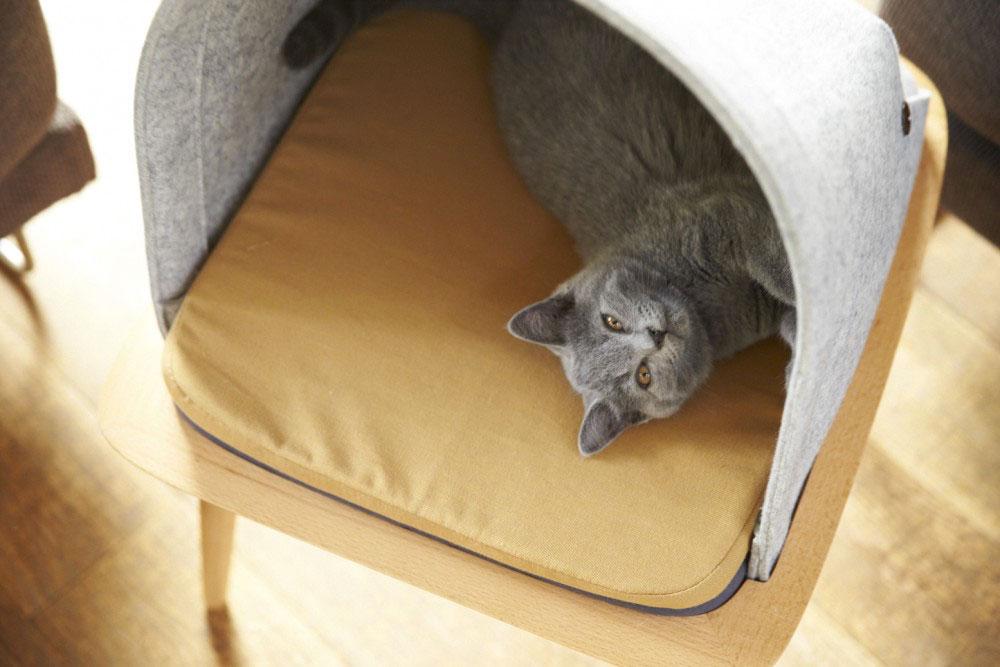 Cucce di design per animali domestici (fortunati).