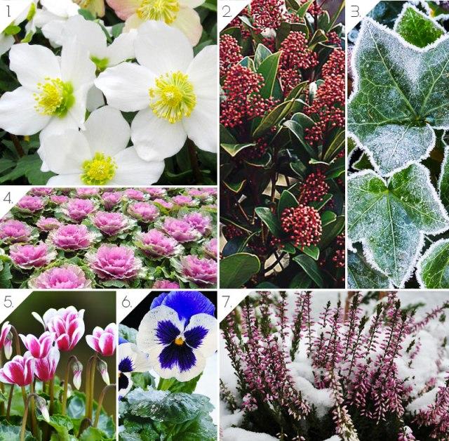piante in inverno per il balcone - idee