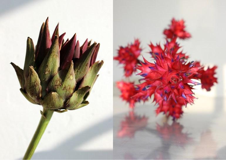 Modarium beeld voor Wilde wonderen moodboard 03 met Hohenbergia stellata en artisjok